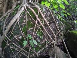 «Храм матери природы»
